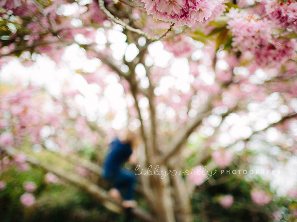 Cherry Blossom Photography - LibbyOReilly