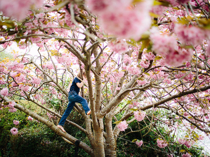 The Prettiest Tree – Cherry Blossom Photography